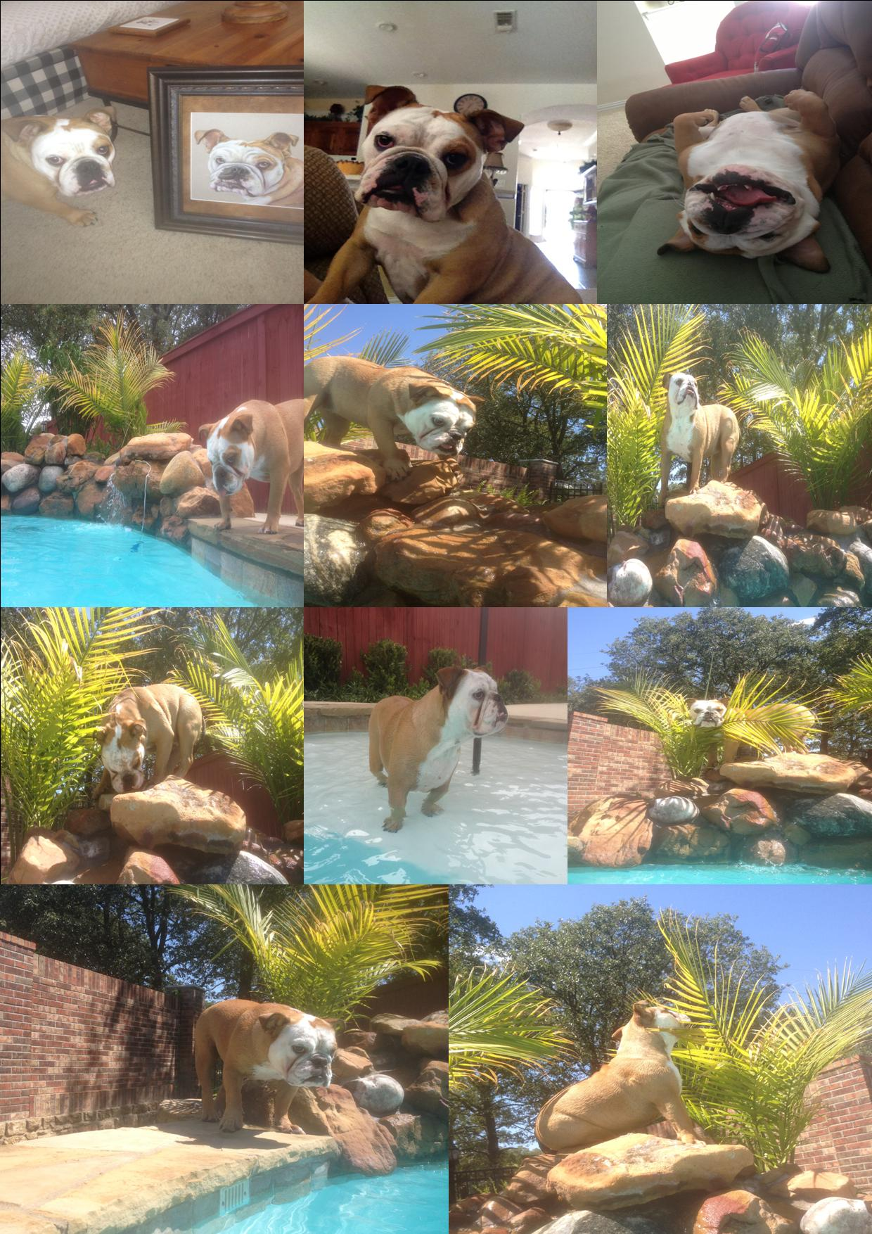 Ellie the Wonder Dog